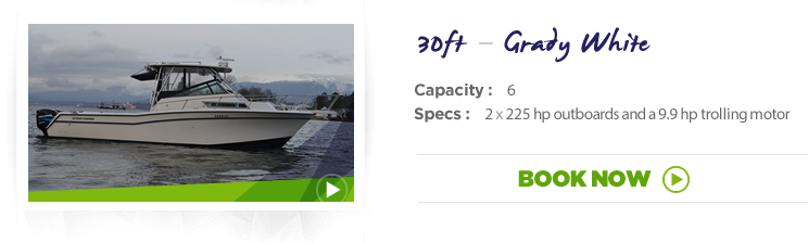 30 ft - Grady White - Marlin